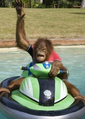 monkey hello