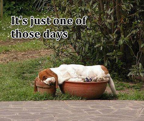 IT IS JUST ONE OF THOSE DAYS!!!! | sondasmcschatter