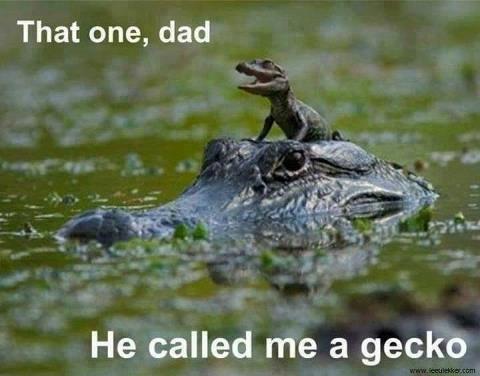 DADDY GECKO