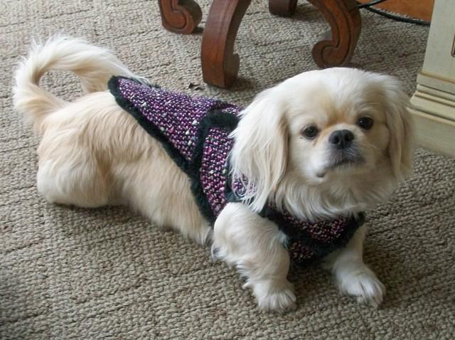 mandy & her coat #2