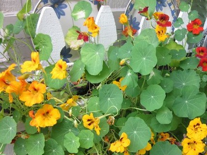 back-ground-flowers.jpg