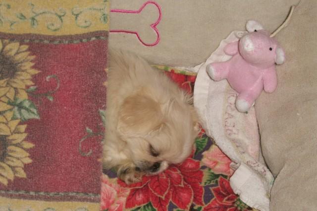 BABY & PINK PIG
