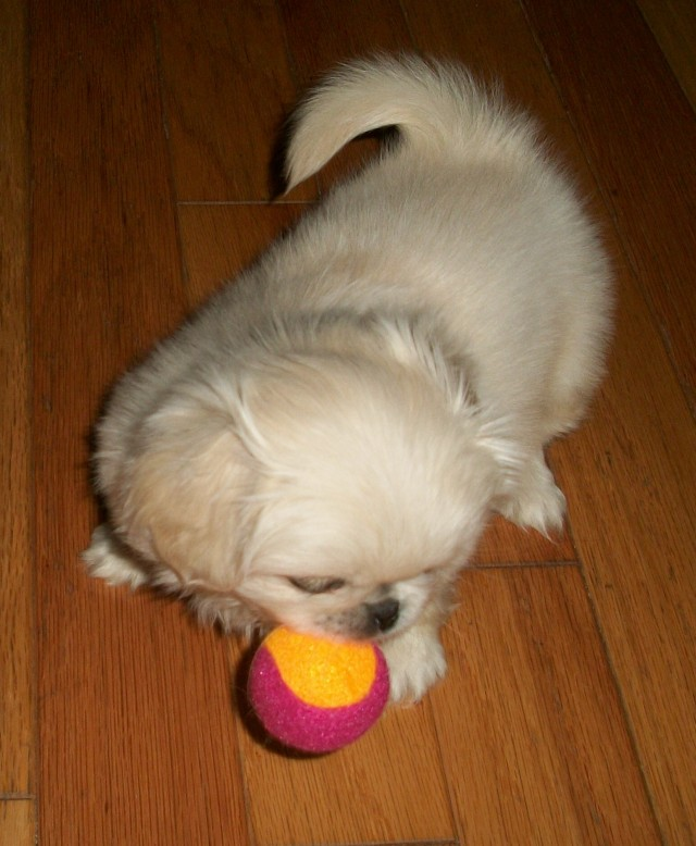 baby playing ball