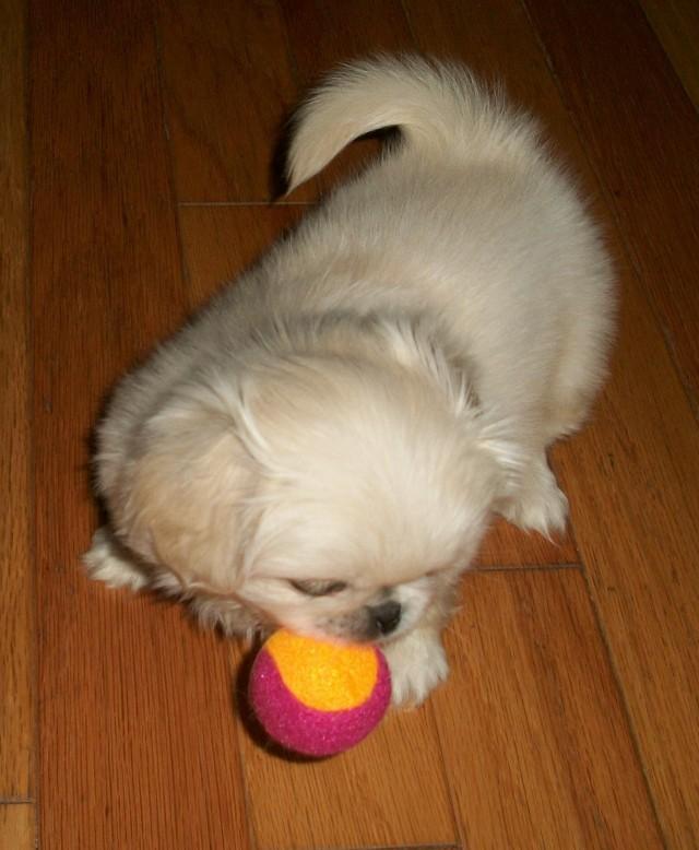 baby playing ball