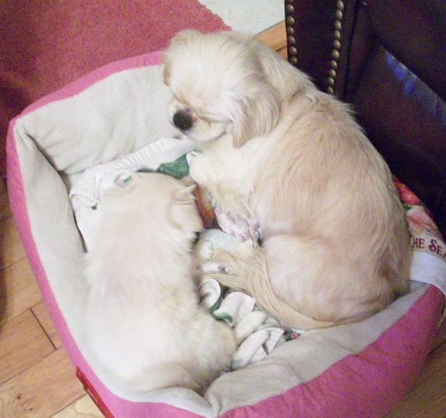 M- BOTH IS PINK BED