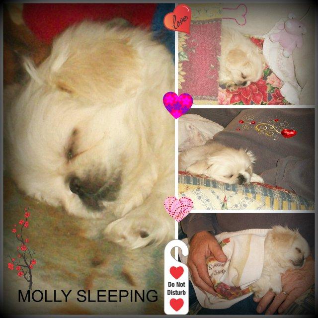 MOLLY SLEEPING REDONE