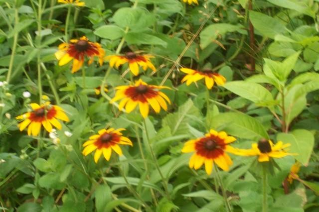 wild-flowers-9.jpg