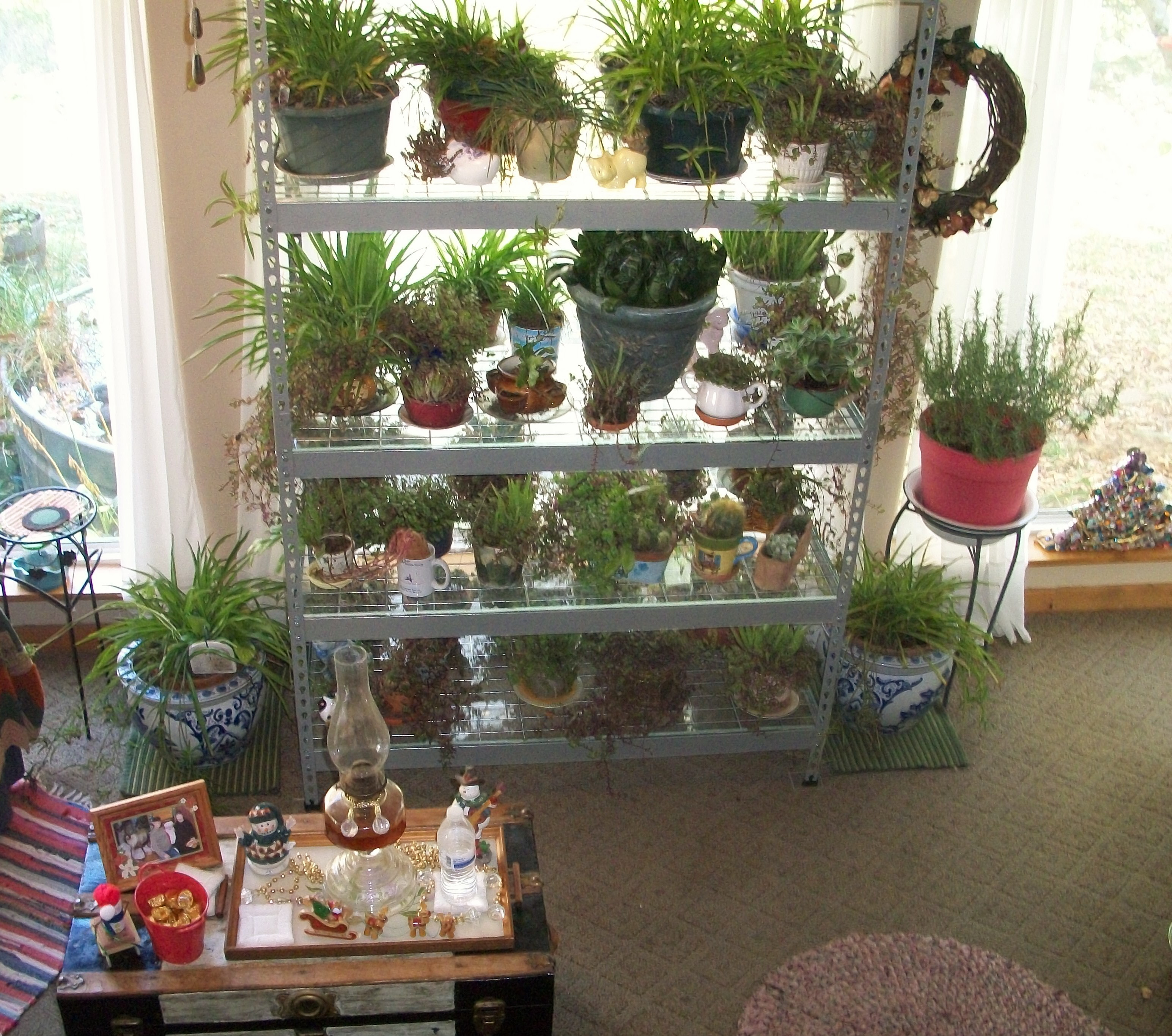 Plants Inside Rooms: OCT. 31, '14 HOUSE PLANTS ARE BACK INSIDE–SUPPOSE TO