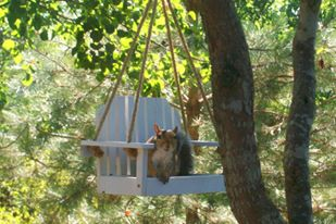 SQUIRREL IN SWING