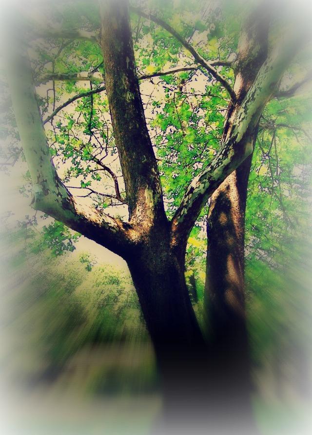 TREE 1 REDONE