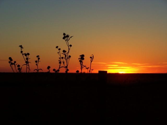 sunset in the flint hills 1