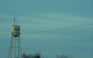 BURNS WATER TOWER & GEESE