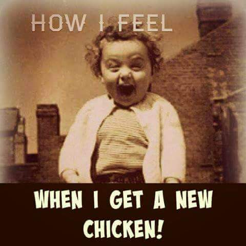 CHICKEN NEW!!!!