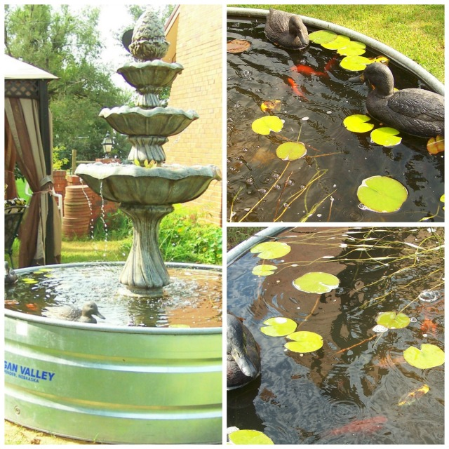 picmonkey-collagefish-pond