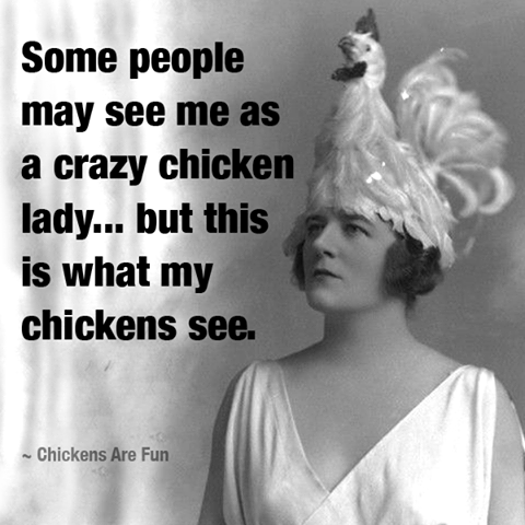 chickens-see