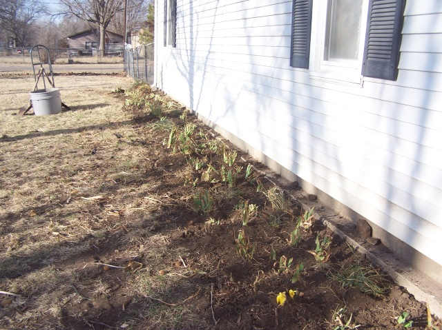 BACK SIDE OF HOUSE FLOWER BED 1