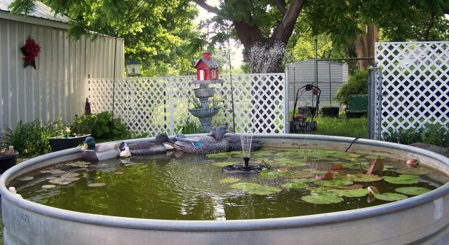 FISH POND EAST SIDE 1