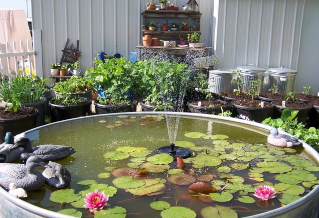 FISH POND & VEGGIES 1.JPG