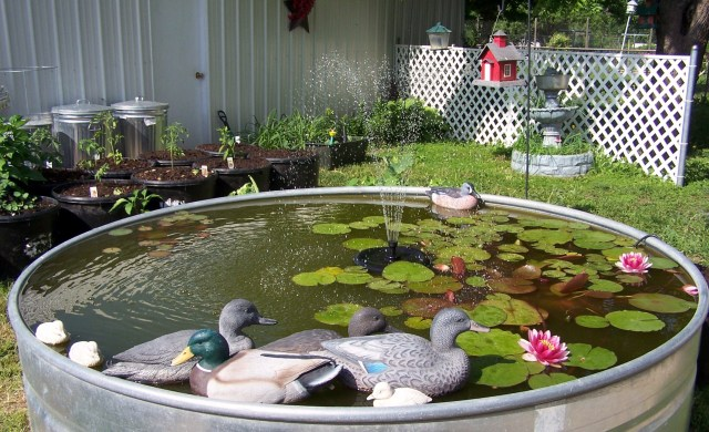 FISH POND & VEGGIES 2