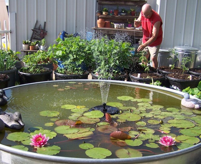 FISH POND & VEGGIES & GARY 2