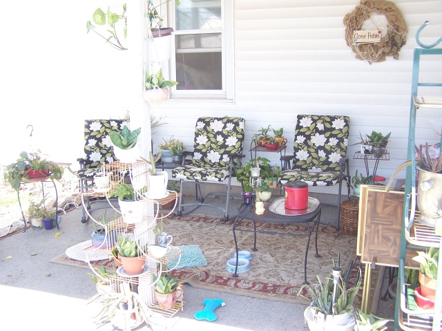 PIC SIDE YARD NOW 10.JPG