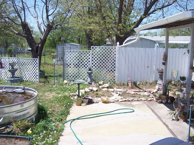 PIC SIDE YARD NOW 8.JPG