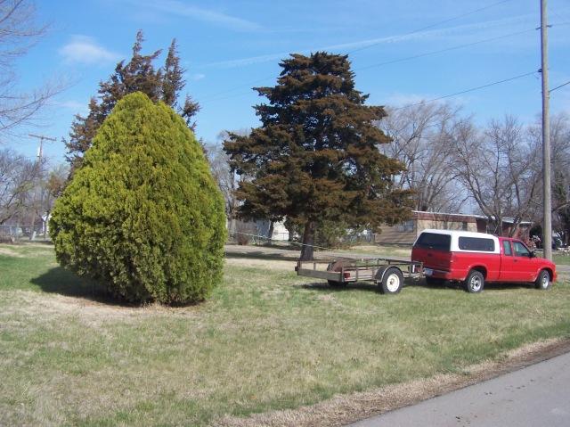 UGLY TREE 2