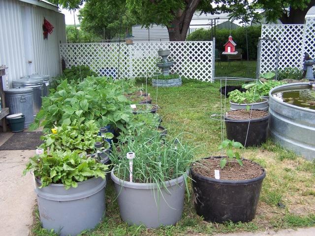 garden more.JPG