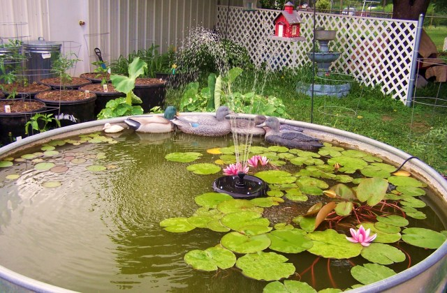 FISH POND OVER & OVER.JPG
