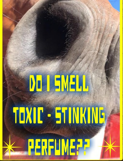 TOXIC PERFUME HORSE