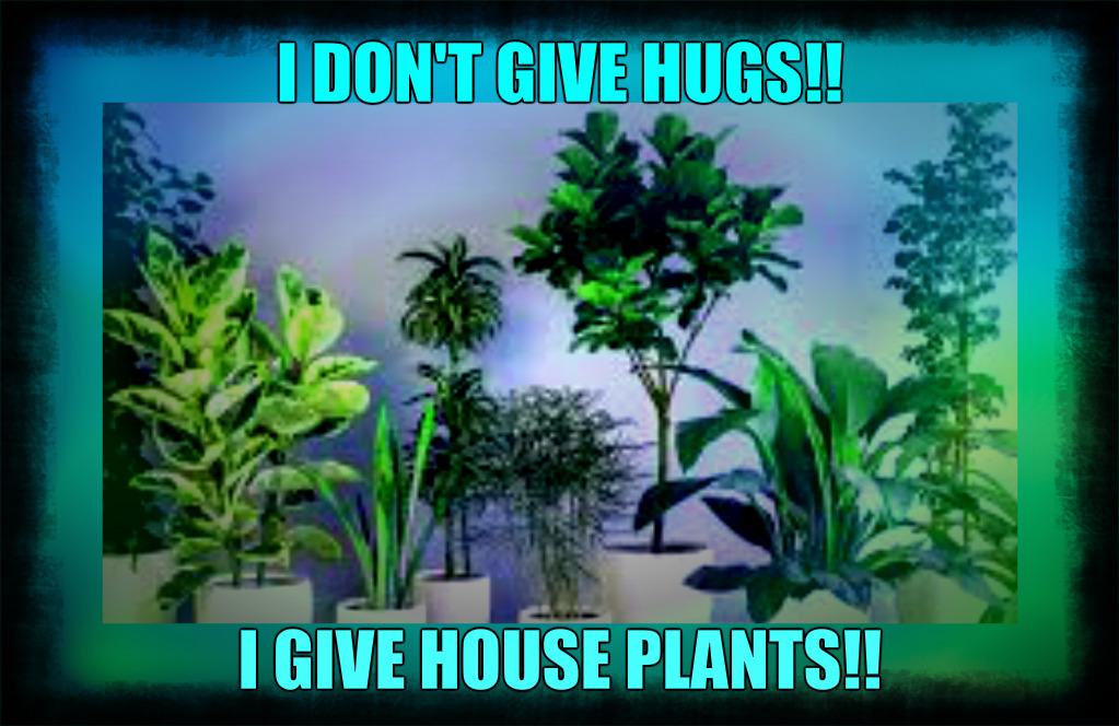 I DON'T GIVE HUGS I GIVE HOUSE PLANTS